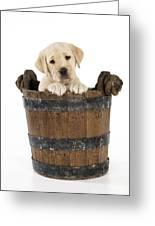 Labrador Puppy In Bucket Greeting Card