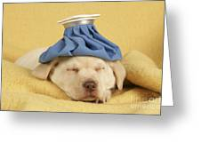 Labrador Puppy With Ice Pack Greeting Card