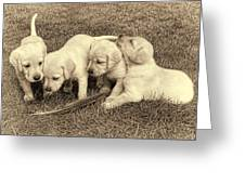 Labrador Retriever Puppies And Feather Vintage Greeting Card