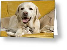 Labrador With Cat Greeting Card