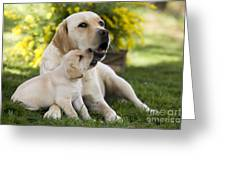 Labrador With Puppy Greeting Card