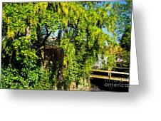 Laburnum By The River Greeting Card