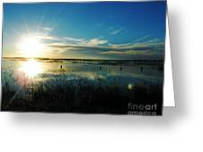 Lacassine Afternoon Sparkle Greeting Card