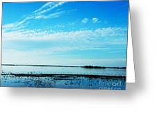 Lacassine Pool Louisiana Afternoon Greeting Card