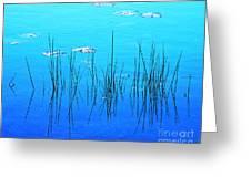 Lacassine Pool Reeds Greeting Card