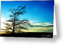 Lacassine Tree Greeting Card