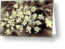 Lace 3 Greeting Card