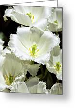 Lace Palm Springs Greeting Card