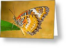 Lacewing Butterfly Cethosia Sp Greeting Card