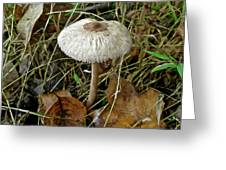 Lacy Parasol Mushroom Greeting Card