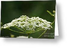 Lacy White Greeting Card