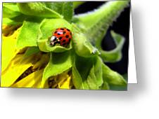 Ladybug And Sunflower Greeting Card
