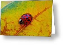 Lady Bug 3 Greeting Card