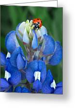 Lady Bug And Bluebonnet Greeting Card