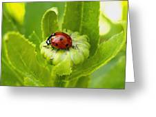 Lady Bug In The Garden Greeting Card