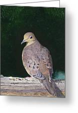 Lady Dove Greeting Card