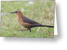 Lady Grackle On A Walk Greeting Card