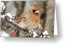 Lady In The Snow Greeting Card