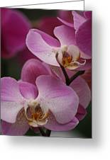 Lady Pink Orchid Greeting Card by Valia Bradshaw
