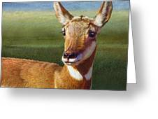 Lady Pronghorn Greeting Card