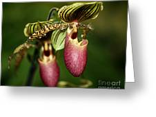 Lady Slipper Orchid Twins Greeting Card