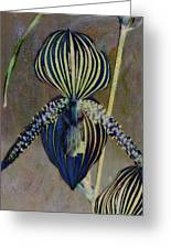 Lady Slipper Secret Garden Greeting Card