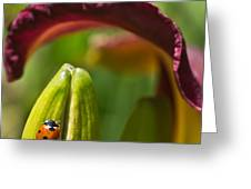 Ladybird Beetle Cuddled By Lily Blossom 4 Greeting Card