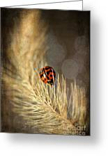 Ladybird Greeting Card by Darren Fisher