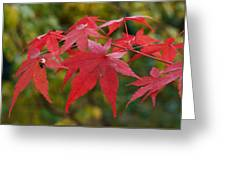 Ladybird With Autumn Leaves Greeting Card