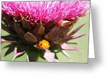 Ladybug And Thistle Greeting Card by Marilyn Hunt