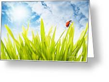 Ladybug Greeting Card by Boon Mee