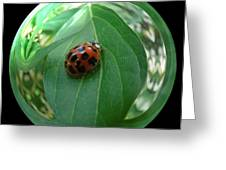 Ladybug Eating Aphids Greeting Card