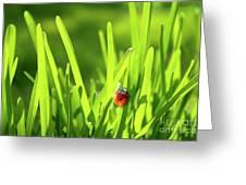Ladybug In Grass Greeting Card