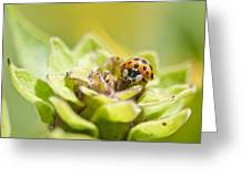 Ladybug On A Bud Greeting Card