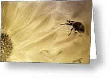 Ladybug On A Sunflower Greeting Card