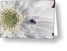 Ladybug On Daisy Petal Greeting Card