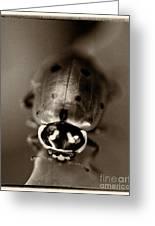 Ladybug On Green Leaf Greeting Card