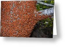 Ladybug Tree Greeting Card