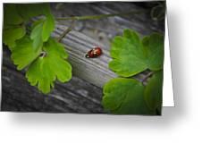Ladybugs Mating Greeting Card