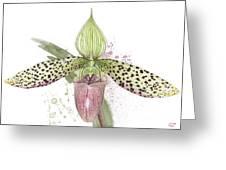 Ladys Slipper - Orchid 16n - Elena Yakubovich Greeting Card
