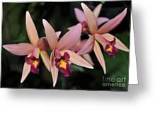 Laelia Santa Barbara Sunset Greeting Card