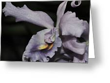 Laeliocattleya Blue Boy 1 Of 2 Greeting Card