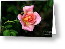 Lafter Hybrid Tea Rose 8990 Greeting Card
