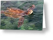 Lager Head Turtle 001 Greeting Card
