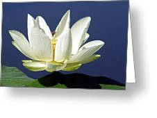 Lagoon Lily And Bee Greeting Card