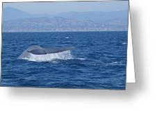 Laguna Whale Greeting Card