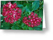 Lahaina Flowers 1 Greeting Card
