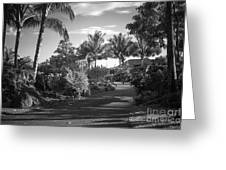 Lahaina Palm Shadows Greeting Card