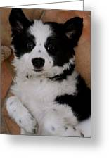 Laid Back Border Collie Greeting Card