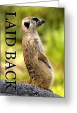 Laid Back Meerkat Phone Case Cut Greeting Card
